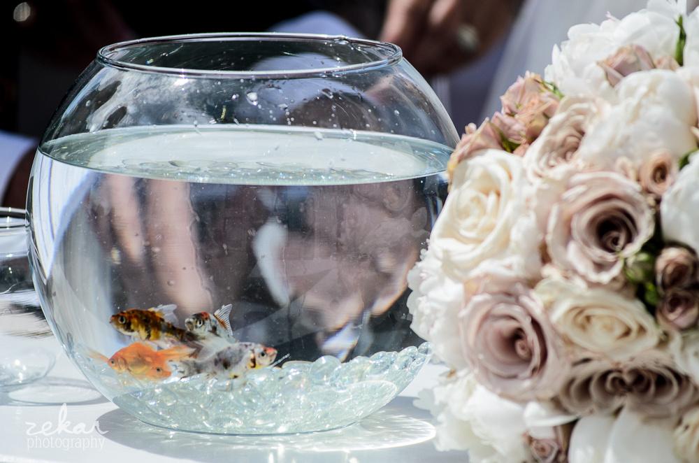 goldfish in goldfish bowl