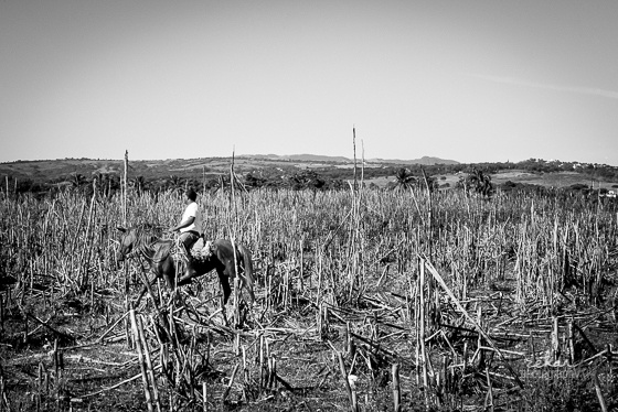 man on horse in sugar canes