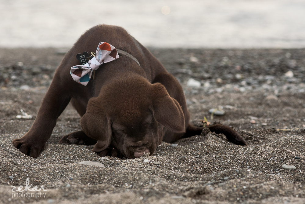 dog sniffing on beach