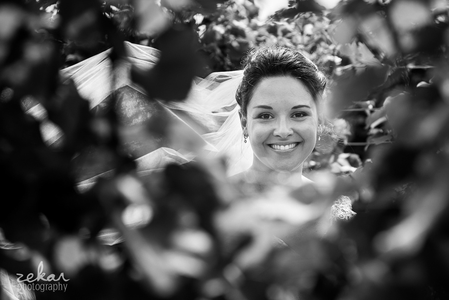 bride in vineyard