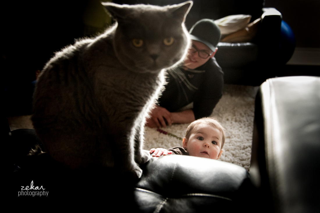baby crawling over to cat